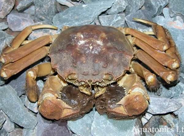 Crab Spread Recipe