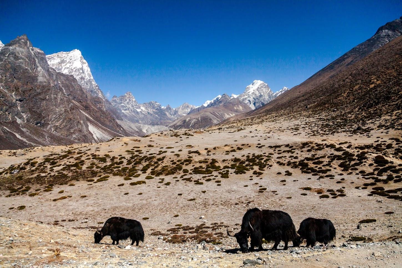 Nepal Partea 4: Kala Patthar, altitudinea şi abandonul