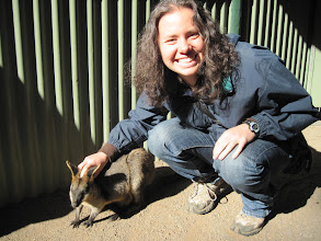 Photo: We took a trip to a wildlife park called Featherdale where we got to play with animals.  This is a wallaby.