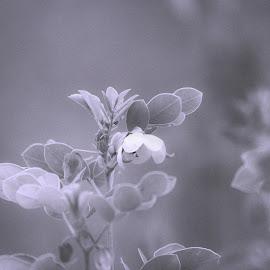 Hope by AJ Canon - Black & White Flowers & Plants ( black & white, petal, bloom, nature, flower )