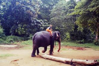 Photo: #004-Promenade de Viviane à dos d'éléphant-Pinnawela
