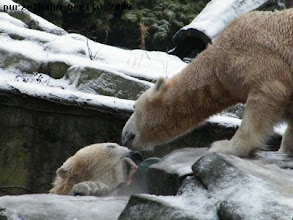 Photo: Nun nimm schon, Knut ;-)