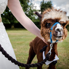 Wedding photographer Steve Grogan (SteveGrogan). Photo of 15.07.2018