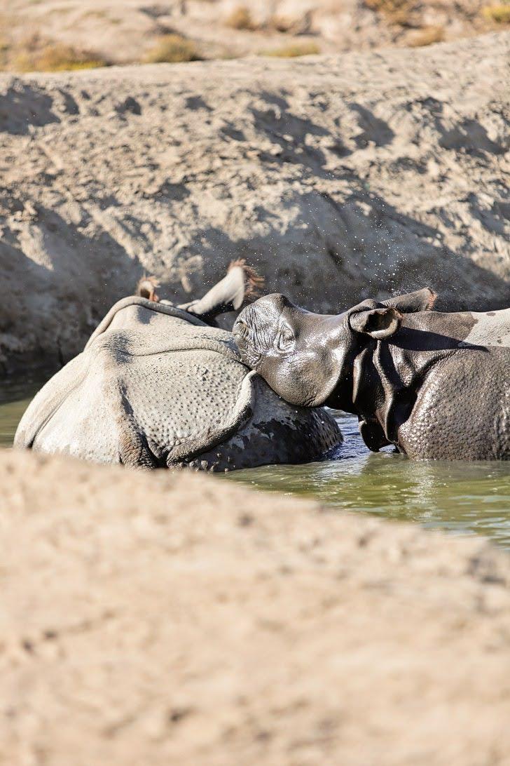 Rhino Feeding at the San Diego Safari Park.