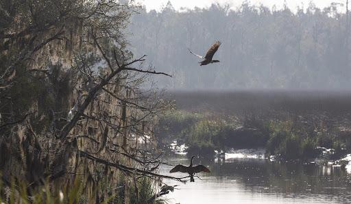Ceylon wilderness a haven for longleaf pine, gopher tortoises, tranquility