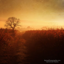 Photo: Bonjour à tous,  L'automne n'est pas encore là mais en forçant un peu... ;-) Effet Orton : http://bit.ly/bHD4NO Textures : http://bit.ly/pesqFL ebook : http://bit.ly/qeKC2E  In a few days will release the English version of my first ebook: Natural Landscape and Photography. Stay tuned !!!