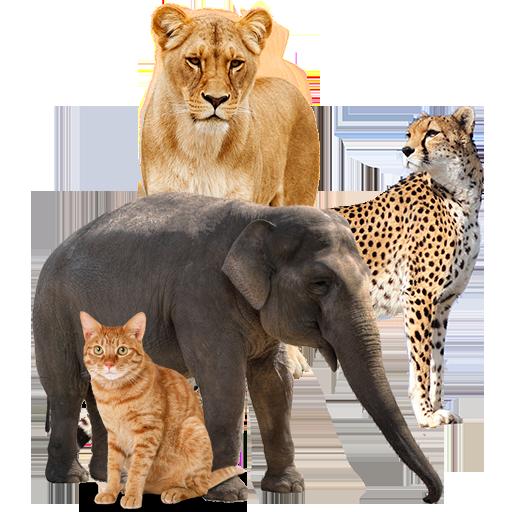 تعليم أسماء الحيوانات