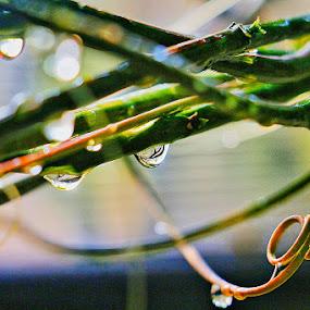 Morning Dew by Frans Priyo - Uncategorized All Uncategorized ( water, tree, nature, green, dew, art, drops, artistic, beauty in nature, leaf, garden, artwork )