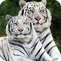 Big Cats Live Wallpaper icon