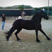 I cavalli corrono veloci. Fanno a gara con fulmini invisibili che si muovono nell'aria. Cit. di