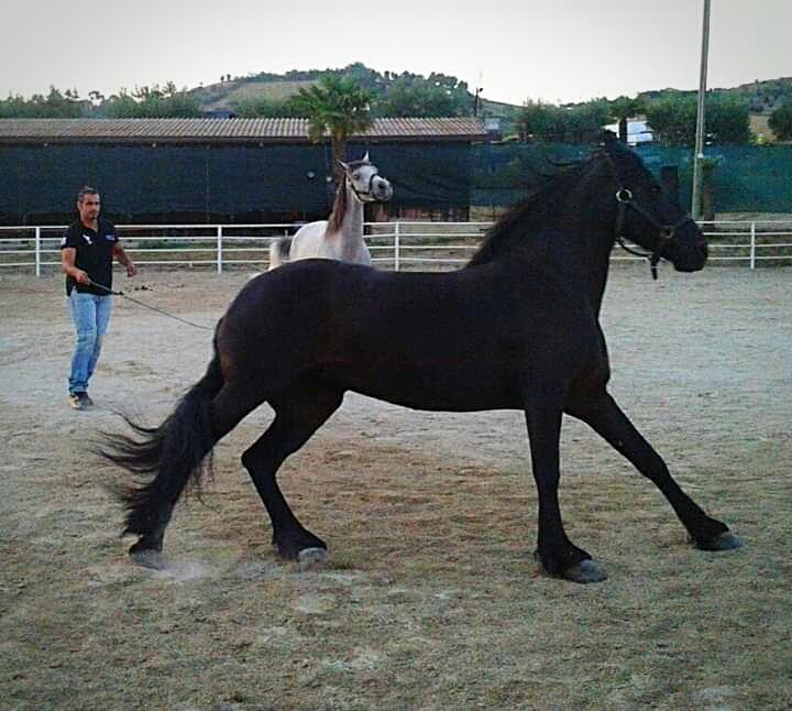 I cavalli corrono veloci. Fanno a gara con fulmini invisibili che si muovono nell'aria. Cit. di Didi - Diana Gabrielli