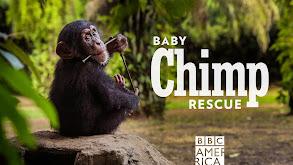 Baby Chimp Rescue thumbnail