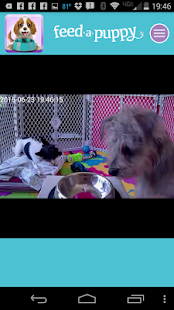 Feed A Puppy- screenshot thumbnail