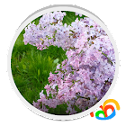 Lilacs Live Wallpaper icon