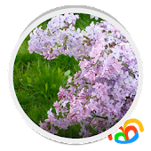 White Lilacs Live Wallpaper