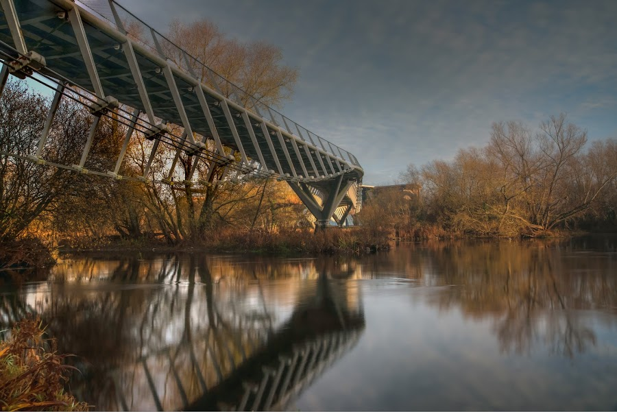 The Living Bridge by John Holmes - Buildings & Architecture Bridges & Suspended Structures ( winter, blue, living bridge, trees, reflections, brown, long exposure, univesity of limerick, winter bridge, river shannon )