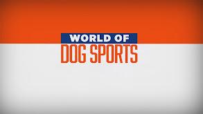 World of Dog Sports thumbnail