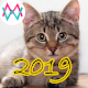Download Cat Sounds For PC Windows and Mac