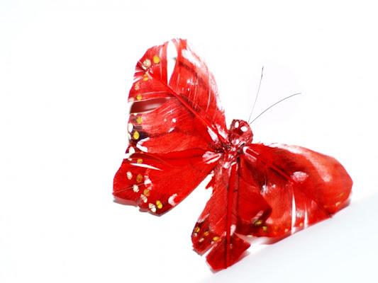 Rosso d'ali di petaloudha
