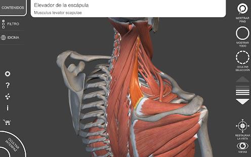 Músculos | Esqueleto - 3D Atlas de Anatomía - Aplicaciones en Google ...