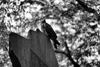 Photo: Nevermore  Another shot taken from the #GPlusPhotowalkJapan  / #GPlus2YearAnniversary  photowalk a couple weeks back.  We couldn't have asked for a better day weather-wise for Google's 2 year anniversary photowalk.  More to come, as I get the time to upload...  Title idea courtesy +Tim Buerger ;)  Happy Monday, time to get ready for work!  Settings: D800E / 105mm / f2.8 / ISO 100 / 1/800s  #plusphotoextract   #blackandwhite   #Japan