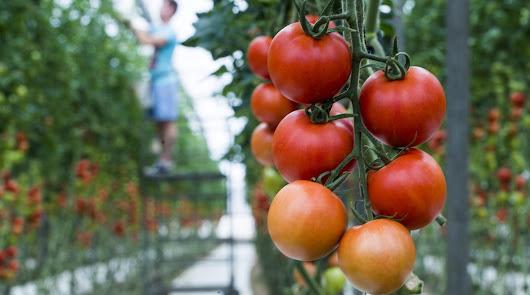 Los agricultores son los más fiables para los consumidores