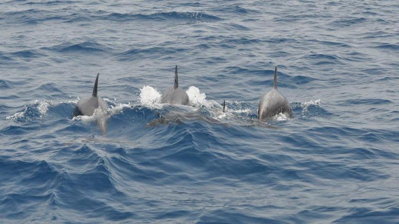 3 Amici Delfini di Marrty