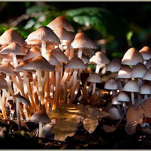 Fungi Forest.jpg