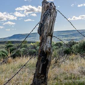 by Jeremy Elliott - Landscapes Prairies, Meadows & Fields (  )