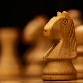 Chess Knight  by Mahesh Gadekar - Novices Only Objects & Still Life ( pixexcelopth )