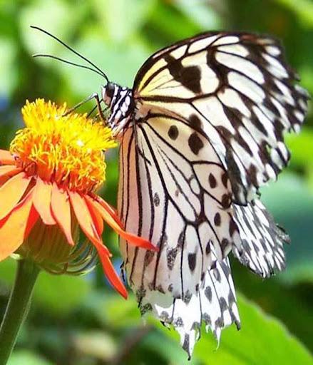 蝶のパズル
