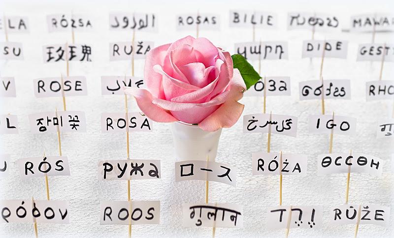 Il nome della rosa di Dariagufo