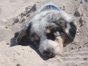 Photo: 8 weeks, Rostock´s beach