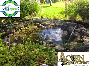 Photo: #PondServices Fall #PondMaintenance in Rochester NY, Winter Pond preparation in Rochester NY by Acorn Ponds & WaterfallsCertified Aquascape Contractor since 2004.  Check out our website www.acornponds.com and give us a call 585.442.6373.  Tenting, cold water bacteria, fish food, heaters, aerators, solid handling pumps, pond supplies Monroe County, Rochester NY.  Please click here to learn more about our Fall Pond Maintenance: www.acornponds.com/fall-maintenance.html  Click here for a free Magazine all about Ponds and Water Features: http://flip.it/gsrNN  Check out our pond photo albums on Pinterest here: www.pinterest.com/acornlandscape/  To see more of our #pondinstallations on Facebook click here: www.facebook.com/media/set/?set=a.464911070212687.94604.103109283059536&type=3  Acorn Ponds & Waterfalls  585.442.6373 www.acornponds.com