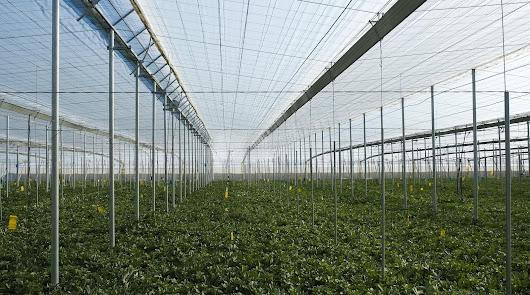 La Junta recomienda que cada explotación agrícola tenga un plan antiCovid
