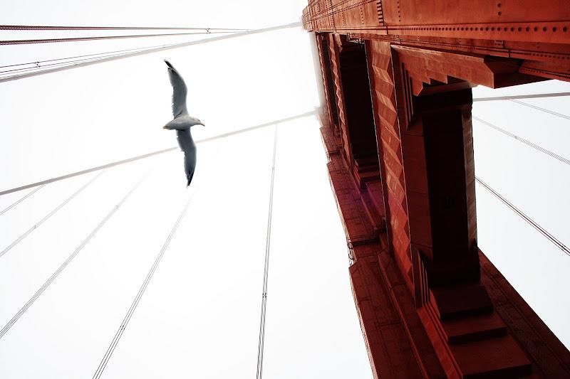 Un insolito Golden Gate di Salvatore Massaiu