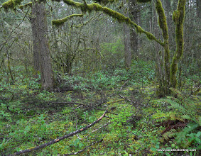 Photo: An inside glimpse at the rainforest
