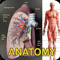Anatomy Of Human Body icon