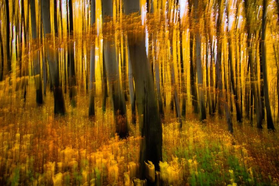 by Gorazd Golob - Landscapes Forests