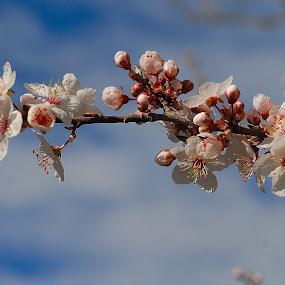 Flores de primavera by Daniel Sapag - Uncategorized All Uncategorized