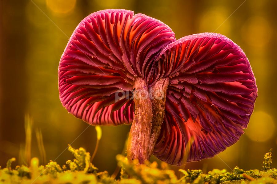 Colourful fungi in the moss by Peter Samuelsson - Nature Up Close Mushrooms & Fungi ( mushroom, fungi )