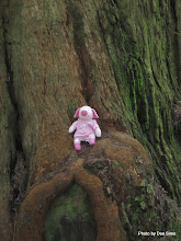 Photo: (Year 2) Day 360 - Pippa at the Bottom of a Redwood #2
