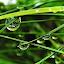 ...rainy day... by Karel Šula - Uncategorized All Uncategorized