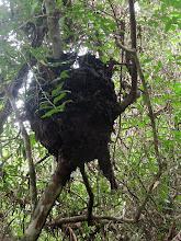 Photo: Cerro Biotope Cahui, El Remate