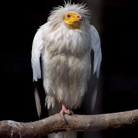 by Jarda Chudoba - Animals Birds