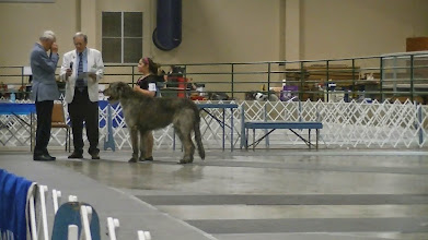 Photo: 07-13-2014 Franky with Zion Best Junior receiving ribbon for Best Junior from hound group judge Southaven MS show.