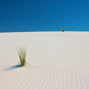White Sands Grass.jpg