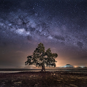 Milky way above Lone Tree by Joyce Chang - Landscapes Starscapes ( tree, mersing, stars, long exposure, milkway )