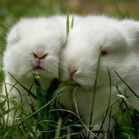 Snuggles by David Spillane - Animals Other Mammals ( rabbit,  )