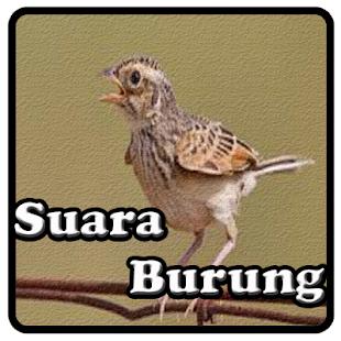 Kicau Branjangan - náhled